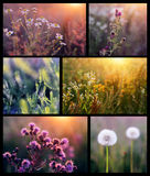 Flower collage. Collage with beautiful flowers in the sunshine Stock Photography