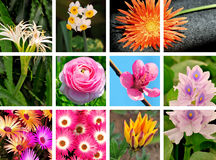 Flower collage. Collage of flowers looking great Royalty Free Stock Photography