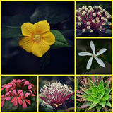 Flower Collage Stock Photos