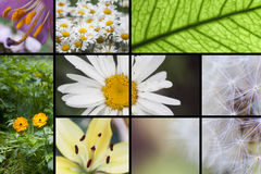 Flower collage Royalty Free Stock Photos