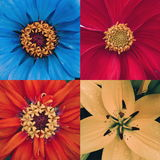 flower collage macro square composition Stock Photo