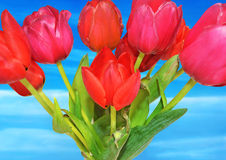 Flower collage - red tulips - sky flower royalty free stock image