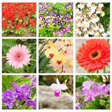 Flower collage of Salvia splendens,Torenia fournieri,Gerber and orchid Stock Images