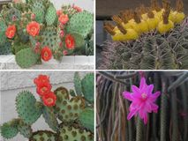 Flower Collage Royalty Free Stock Photography