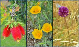 Flower collage Royalty Free Stock Image