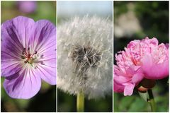 Flower collage Royalty Free Stock Photo