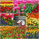 Flower collage - tulips and Dutch shoes in park Keukenhof, Holla Stock Photos