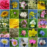 Flower collection Stock Photos