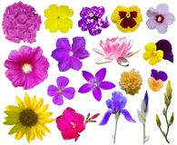 Flower Collection 2 Royalty Free Stock Images