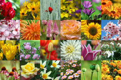 Flower collection Royalty Free Stock Images
