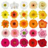 Flower collection stock images