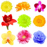 Flower Collection Royalty Free Stock Photos