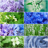 Flower collection Royalty Free Stock Photo