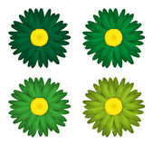 Flower collection of  daisies Isolated on white background. Spring. Green edition. Royalty Free Stock Photos