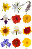 Flower collection, isolated on white background Stock Photography