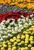 Flower color exhibition. Summer garden and design of a bed. Stock Photos