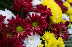 Flower color red White and yellow Stock Photo