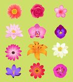 Flower Color Set Design Flat  Stock Images