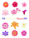 Flower Color Set Design Flat  Stock Image
