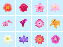 Flower Color Set Design Flat  Stock Photo