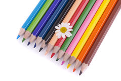 Flower on colored pencils Royalty Free Stock Photography