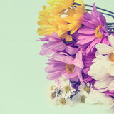 Flower colorful for background  retro filter effect Stock Photography