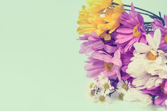 Flower colorful for background  retro filter effect Royalty Free Stock Photo