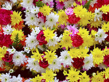 Flower colorful beautiful  background. Flower colorful beautiful blossom for background Stock Photography