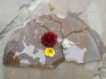 Flower. Colorful flowers on grey asphalt Stock Photos