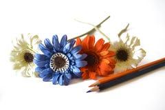 عالم الألوان flower-colorful-gerb