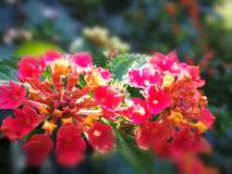 Flower colors. Color contrasts in Nature Stock Photography