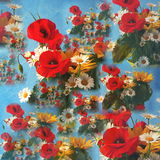 Wild flowers. Colorful background composed of red poppies, white daisies, and small yellow sunflowers on blue Stock Images