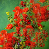 Flower composition. A composition of flower bunches Stock Image