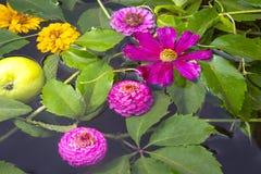 Flower Composition Stock Photos