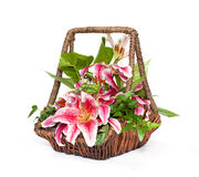 Flower composition in basket Royalty Free Stock Image