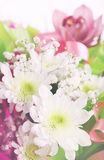 Flower composition of chrysanthemums Stock Images