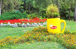 Flower composition with Lipton mug on annual traditional 59 flower exhibition One country, kyiv, ukraine Royalty Free Stock Photos