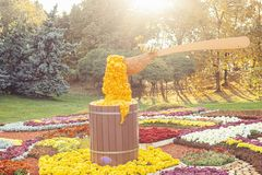 Flower composition in the park. A barrel of honey and a spoon Royalty Free Stock Photos