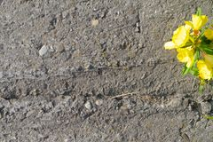 Flower on a concrete Stock Image