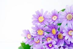 Flower Corner Royalty Free Stock Photo