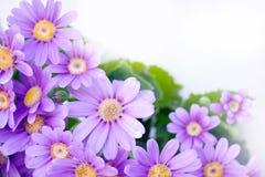 Flower Corner Royalty Free Stock Photography