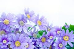 Flower Corner Stock Images