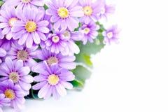 Flower Corner Stock Photography