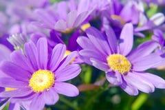 Flower Corner Royalty Free Stock Images