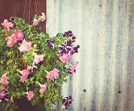 Flower and corrugate fence Stock Images