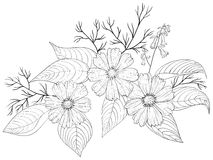 Flower cosmos, contours. Flowers cosmos, , petals and leaves, graphic monochrome contours, isolated Stock Images