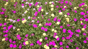 Flower. Cover-crop background texture plant stock photo