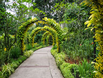 Flower covered archways in the Botanical Garden over a Path Royalty Free Stock Photo