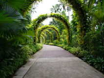 Flower covered archways in the Botanical Garden over a Path Stock Images
