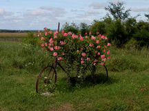 Flower covered bicycle at Pouilly-Sur-Loire, Burgundy, France Royalty Free Stock Image